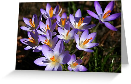 Crocuses - Welcome Spring! by Laurel Talabere