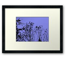 Three Trees Twilight Framed Print