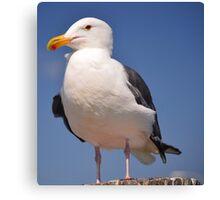 Cosmopolitan Bird- The Seagull Canvas Print