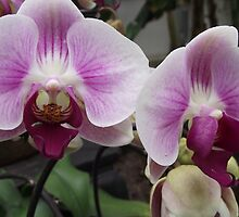 purple orchids by Erika Smith