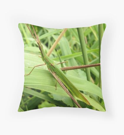 Beauty is in the eye of the beholder, aren't I beautiful Throw Pillow