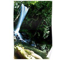 Curtis Falls Mt Tamborine Poster