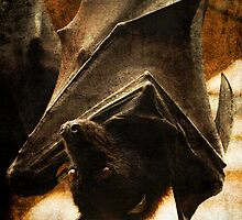 Flying Fox by G. Patrick Colvin