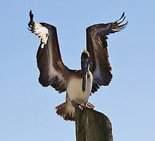 Spreading My Wings by Paulette1021