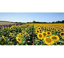 Tour de France Sunflowers Photographic Print