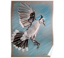 """Blue Jay"" Poster"
