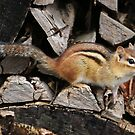 In the Woodpile by Raider6569