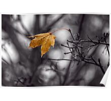 The Last Leaf of Autumn Poster