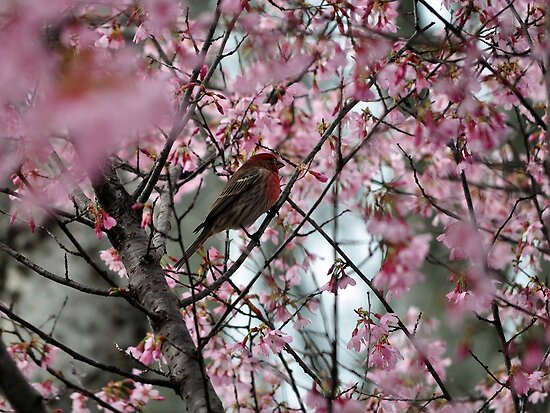 Stopping To Smell The Cherry Blossoms by Gretchen Dunham