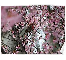 Stopping To Smell The Cherry Blossoms Poster