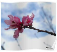 Floating On Air - Spring Peach Blossoms Poster
