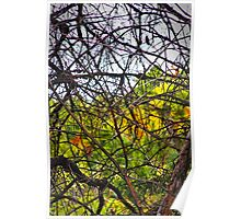 Canadian Autumn Through The Branches Poster