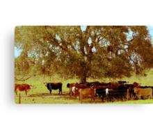 Rural Charm Canvas Print