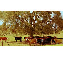 Rural Charm Photographic Print