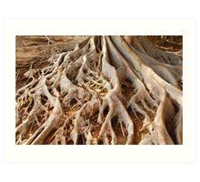 Tree Roots in Balboa Park Art Print