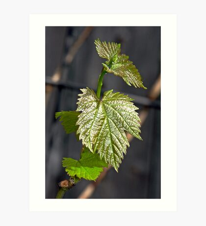 The Promise of Grapes! Art Print