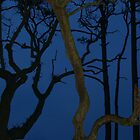 Weird Trees at Twilight by Anna Lisa Yoder