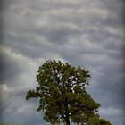 one tree hill by jfpictures