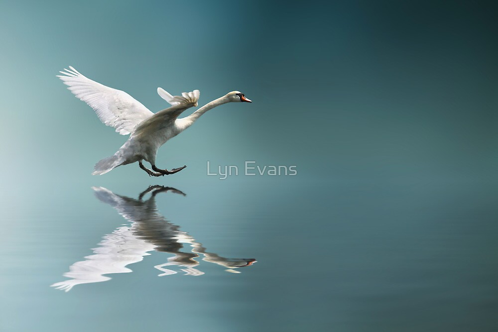 Touchdown by Lyn Evans