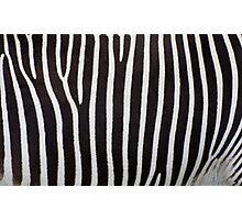 Zebra Skin Photographic Print