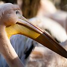 Just another Saturday for a pink pelican by iulix