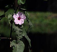 Flower Dhol Kolmee  by HamimCHOWDHURY