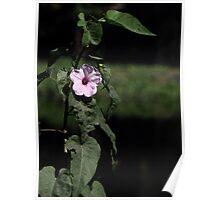 Flower Dhol Kolmee  Poster