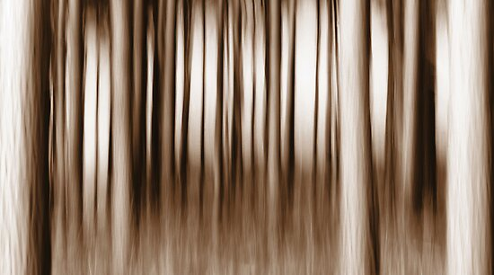 Monochrome Forest by Anne Staub
