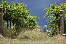 Stormy Vines by yolanda