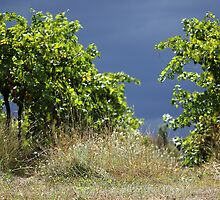 Stormy Vines by yolanda