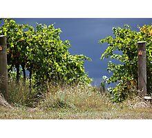Stormy Vines Photographic Print