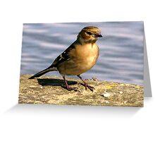 Young Bird Greeting Card