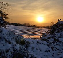 Snowy sunset seen through a hedge. by stefoncox