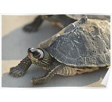 My Pet ..... Turtle Poster