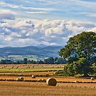 Rural Nature Countryside Scenic Landscape Photography by Noel Moore Up The Banner Photography