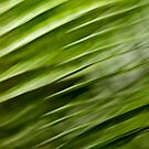 Flight of the palms #05 by LouD