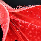 A Twist Of Red  by Amy Dee
