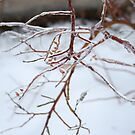 Ice-coated Branches by Anna Reinalda