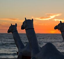 """Camels - Cottesloe """"Sculpture by the Sea"""" by Sandra Chung"""