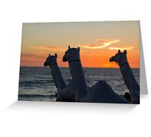 "Camels - Cottesloe ""Sculpture by the Sea"" Greeting Card"