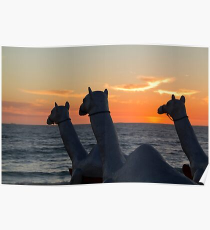 """Camels - Cottesloe """"Sculpture by the Sea"""" Poster"""