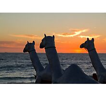 "Camels - Cottesloe ""Sculpture by the Sea"" Photographic Print"