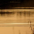 Ripples of a Swan by Mjay