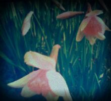 Spring at Well Hall Pleasaunce - Lomo-style by Lisa Hafey