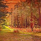 Leading to Anderwood Inclosure: New Forest by dmacwill
