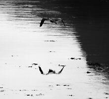 Heron takes flight by Chris Cherry