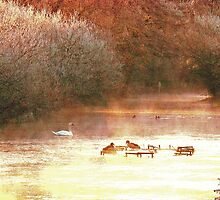 River Test in Winter sunshine by dmacwill