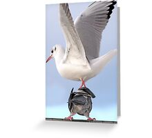 Drop by Anytime Said the Pigeon to the Gull Greeting Card