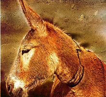 New Forest Donkey by dmacwill