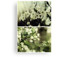 Spring - Cherryblossom Green Canvas Print